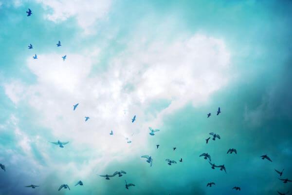 鳥害イメージ