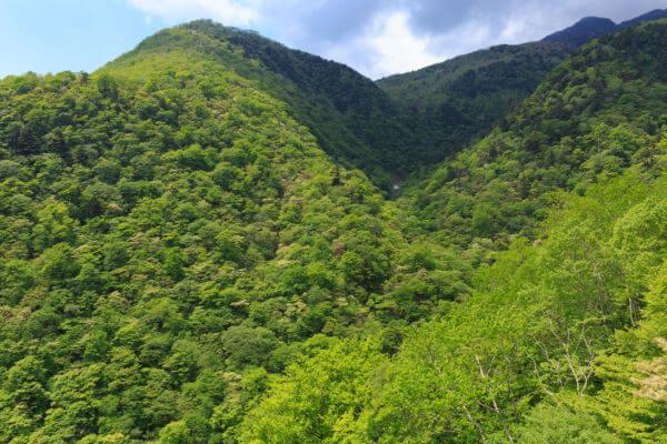 山林イメージ